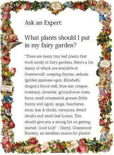 What plants should I put in my fairy garden? Cheryl from Greenwood Nursery was so nice as to suggest tiny-leafed flowers for the fairy creatures and gave me a great list of plants to use!
