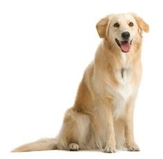 Dog Obedience Tips – Things You Should Know About Training Your Dog #DogObedienceTipsandAdvice