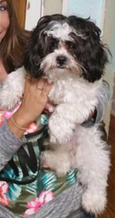 Helping Lost Pets | Dog - Shih Tzu - Back Home
