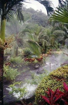 Costa Rica #rainforest #beautiful #nature #travel
