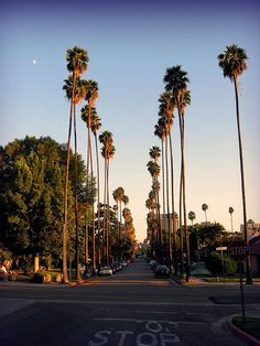 this would be a street in my neighborhood. the sun is rising early in the summer and i have a whole day planned with my friends Glendale Sunset Glendale California, California Sunset, California Travel, Los Angeles Wallpaper, Beautiful Places, Beautiful Pictures, City Of Angels, Sky Aesthetic, Dream City