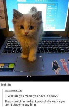 lipstickstainedlove: itsstuckyinmyhead:Cats and Tumblr THE LAST ONE FUCK