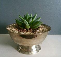 Silver Plated Bowl Succulent Arrangement