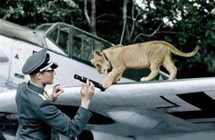Lieutenant Franz von Werra and his live mascot lion cub Simba. Wing guns of the BF-109E-4 20-mm MG-FF original equipment. Killed while on patrol Scandinavia - motor is jammed