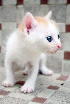 tiniest tiny!