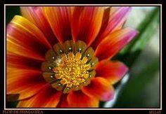 flor de primavera - Buscar con Google