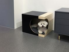 550 x 400 x 400 (mm) Modern Dog Houses, Cat Towers, Dog Furniture, Cat Condo, Buy A Cat, Animal Design, Dog Bed, Pet Dogs, Pets