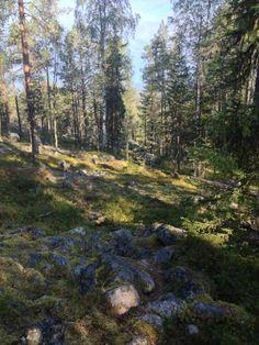 On the way to Everstin piilo, Pello, Lapland