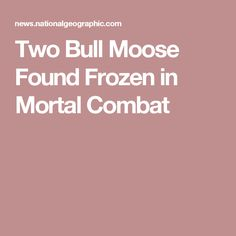 Two Bull Moose Found Frozen in Mortal Combat