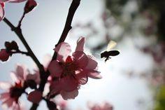 Avida la abeja por comer