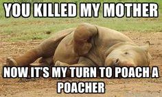 Ronnie Rhino via Meme Generator
