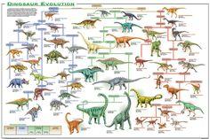 evolution chart | ... of vertebrate evolution evolution of dinosaurs evolution of fish
