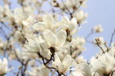 화사한 봄꽃이 산과 들을 아름답게 수놓은 17일, 하나님의교회 세계복음선교협회(총회장 김주철 목사)는 구미시 광평동에 소재한 구미 하나님의교회(안상홍증인회)에서'우리 어머니' 전시회를 개막하고 약 8주간의 전시 일정에 들어갔다.