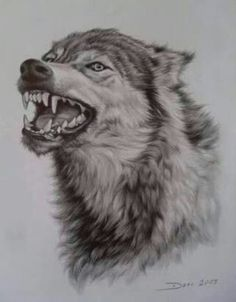 Ideas Tattoo Wolf Sketch Wolves For 2019 Animal Sketches, Animal Drawings, Art Sketches, Art Drawings, Wolf Drawings, Drawing Animals, Sketch Drawing, Pencil Drawings, Wolf Tattoos