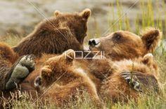 three bear cubs - Three bear cubs climb on their mother