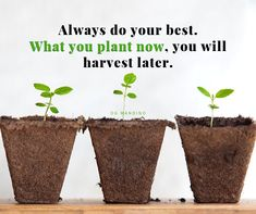 Is this true for you? Do you almost always try to do your very best? Do Your Best, Harvest, Free
