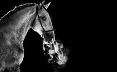 www.horsealot.com, the equestrian social network for riders & horse lovers | Equestrian Photography : Raphael Macek.