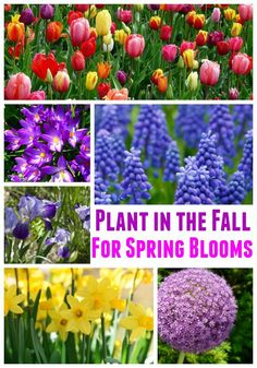 When this combination blooms next spring your yard will be the envy best fall bulbs for spring blooms mightylinksfo