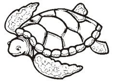 Sea Turtle Pattern Coloring Page Free Printable Coloring Pages