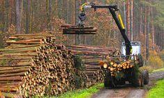 DOVADA! Cine a dat pădurile României pe mâna lui Schweighofer? ADRIAN NĂSTASE şi…