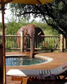 an elephant came for a drink