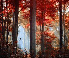 Power of the Fall by ildikoneer