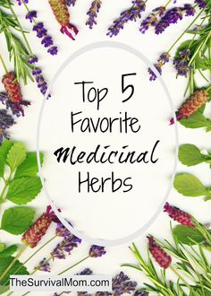 It's easy to learn how to use medicinal herbs. Here are 5 that are readily available & versatile. | via www.TheSurvivalMom.com