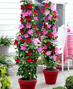 Selecting Plants for Container Gardening Occasionally, landscaping your home can be difficult, but most of the time it appears harder than it actually is. Outdoor Garden Bench, Garden Planters, Container Plants, Container Gardening, Plant Design, Garden Design, Flower Tower, Short Plants, Pot Jardin
