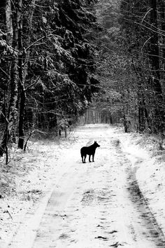 Path of the Wolf. Photo by Kanteletar