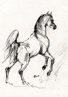 Horse Drawing - Horse Sketch 30 07 2013 by Angel Tarantella Horse Drawings, Animal Drawings, Art Drawings, Easy Horse Drawing, Painted Horses, Animal Sketches, Drawing Sketches, Drawing Drawing, Sketching