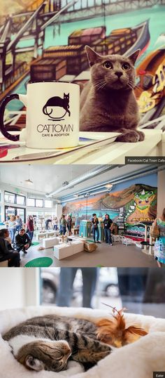 Visit the first American cat-cafe in Oakland, California.