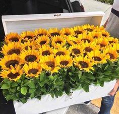 ideas for wall paper sunflower design Giant Sunflower, Sunflower Design, Sunflower Fields, Happy Flowers, My Flower, Beautiful Flowers, Flower Wrap, Sun Flowers, Paper Sunflowers