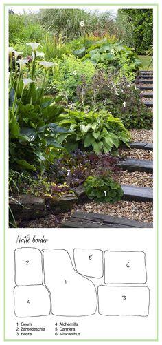 Border for Wet Soil ......................... 1. Avens 'Borisii' (Geum coccineum)  2. Calla Lily (Zantedeschia aethopica)  3. Hosta 'Fortunei Hyacinthina'  4. Lady's Mantle (Alchemilla mollis)  5. Umbrella Plant (Darmera peltata)  6. Eulalia, Maiden Grass 'Gracillimus' (Miscanthus sinensis)