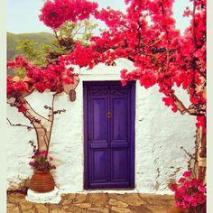 Porta azul e primaveras.