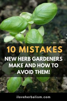 Container Gardening For Beginners Herb growing mistakes to avoid in your garden - 5 Dos and Don't for Planting Herbs. Simple advice to help your container herb garden thrive so you can have fresh herbs any time for any recipe or dish!