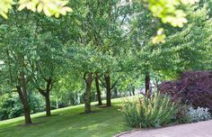 Lawn areas dotted with trees create a low maintenance landscape in the Frasers garden.
