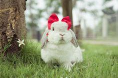 Bunny with a bow