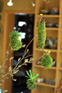 Miniature hanging garden