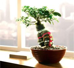 Σωστή τοποθέτηση-Κατάλληλο περιβάλλον για bonsai - library.bonsaiforum.gr