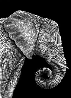 "Awesome elephant drawing by Tim Jeffs ""I've spent the past year trying to draw the most detailed animals as possible"" http://www.etsy.com/listing/160765420/elephant-ink-drawing?ref=shop_home_active"