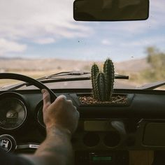 Road Trip :: Seek Adventure :: Explore With Friends :: Summer Travel :: Gypsy Soul :: Chase the Sun :: Discover Freedom :: Travel Photography :: See more Untamed Road Trip Destinations + Inspiration @untamedorganica