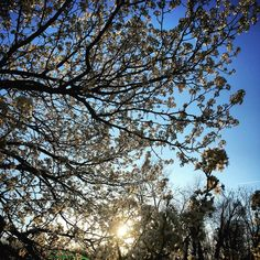 Sunrise Spring, Fun Activities To Do, Blossoms, Cherry Blossom, Clouds, Seasons, Outdoor, Outdoors, Flowers