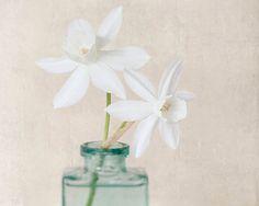 White Daffodil Print Still Life Photography от RockyTopPrintShop