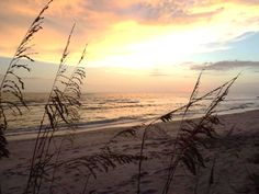 Join us on Florida's Gulf Coast for wonderful sunsets on the beach!