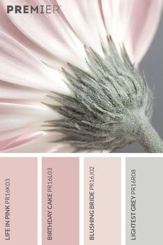Soft and delicate flora colour palette. Life in Pink: Birthday Cake: Blushing Bride: Lightest Grey: Today let's do pastel pinks with palest greyA gorgeous feminine mood board with the flower as a beautiful representation of the palette. Interior Paint Colors, Paint Colors For Home, House Colors, Paint Colours, Colour Pallette, Colour Schemes, Color Combos, Grey Palette, Neutral Color Palettes