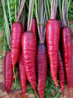 Purple Dragon There's been a proliferation of new purple carrot varieties over the past few years. we've tried many o...
