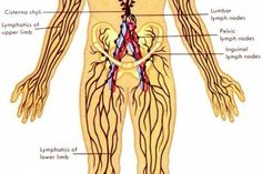 21 Best Digestive System Images And How It Works Images