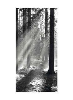 Waldstimmung Motivdruck Papier, schwarz/weiß