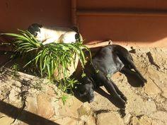 SudAfrica - riposo canino