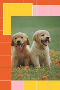 Puppy Training for your puppy is something that will give you a wonderful experience for your puppy and you. Animals And Pets, Baby Animals, Cute Animals, Brain Training, Training Your Dog, Dog Runs, Do Anything, Aesthetic Pictures, Dog Breeds